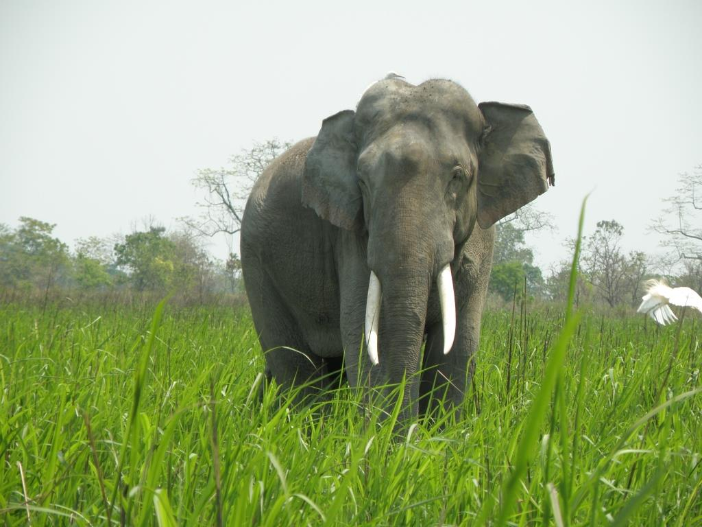 God's own country or elephants' graveyard?