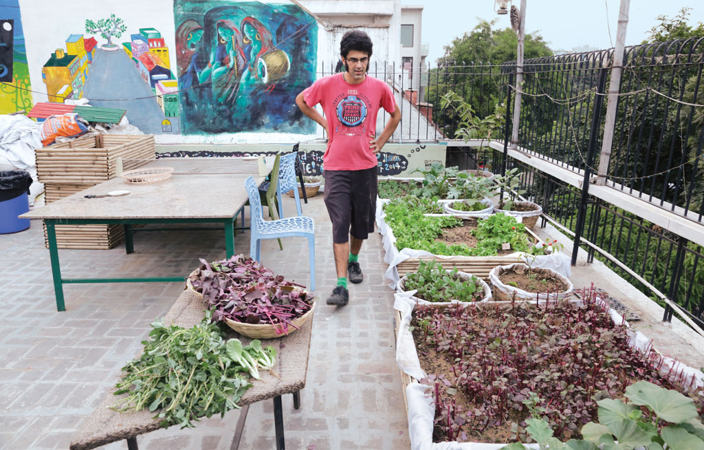 How urban gardening is growing because of these organic for Terrace kitchen garden india