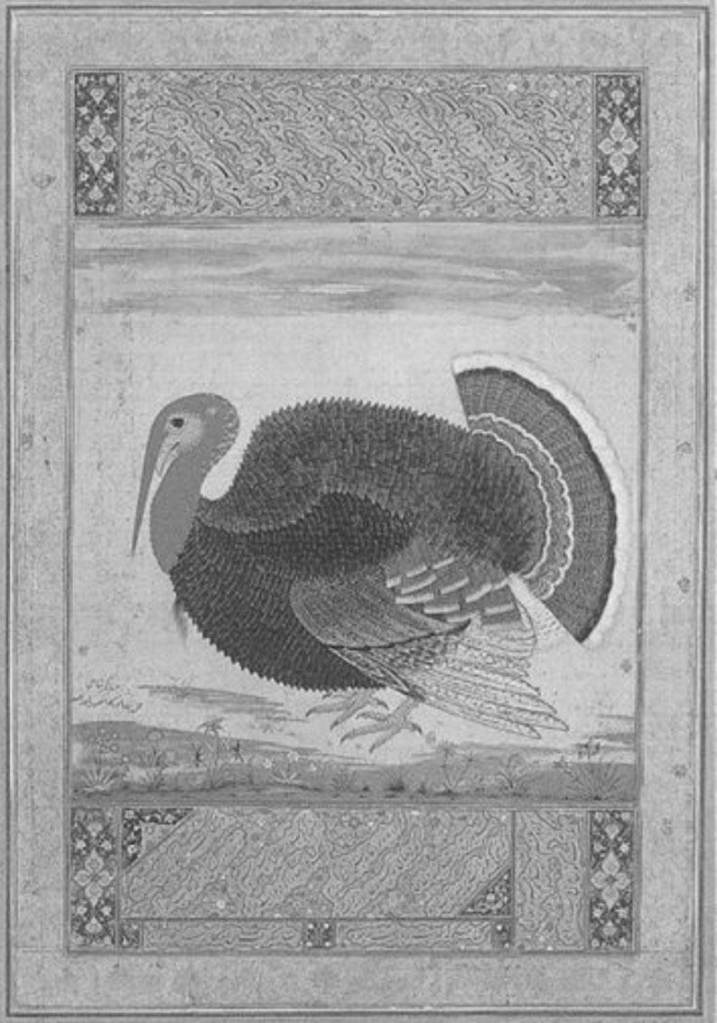 A turkey drawn by Ustad Mansur, circa 1612, at the Victoria and Albert Museum in London (Source: Ebba Koch)