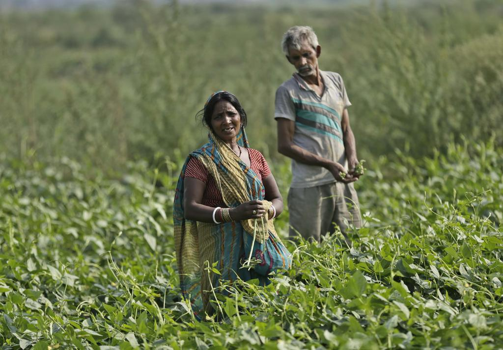 Cabinet gives nod to new agriculture insurance scheme