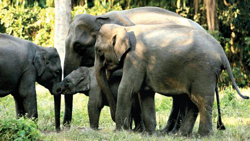 World Wildlife Day: India's conflict with elephants