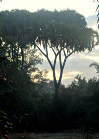 The park, spread over 46 ha, is home to diverse tree species, including the rare Baroda palm