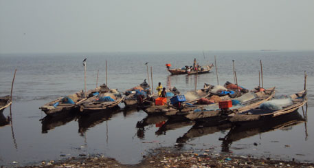 These bacteria and their bio-products can help local fishers find alternative sources of income. (Photo:  Sushmita Sengupta)