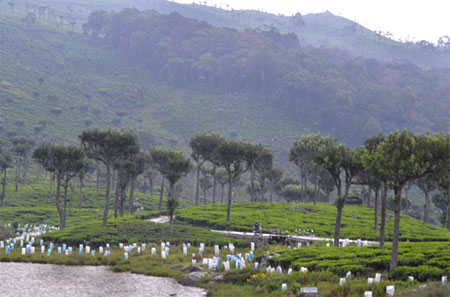 Tea in the central highlands