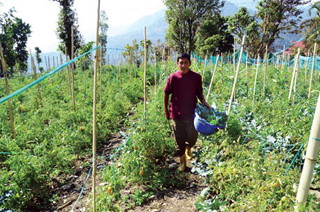 Assam moves to curb pesticides in vegetables, tea