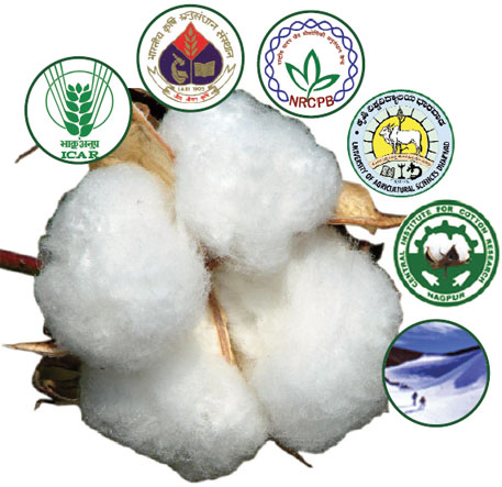 Untangling India's Bt cotton fraud