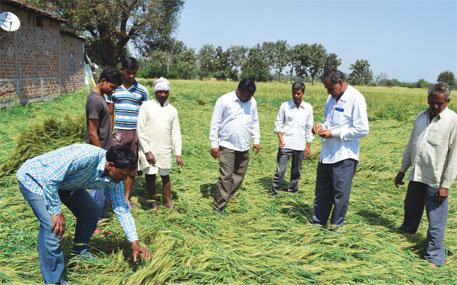 Farmers inspect crops damaged by hailstorm in Hoshangabad district of Madhya Pradesh on February 27