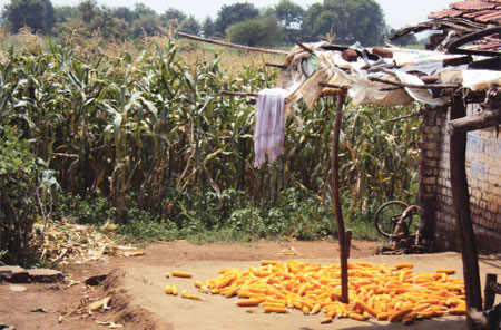 Odisha's corn push
