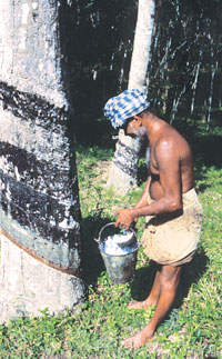 Kerala opposes GM rubber