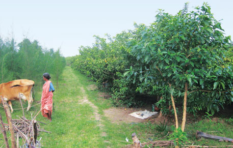 New policy to revive agroforestry