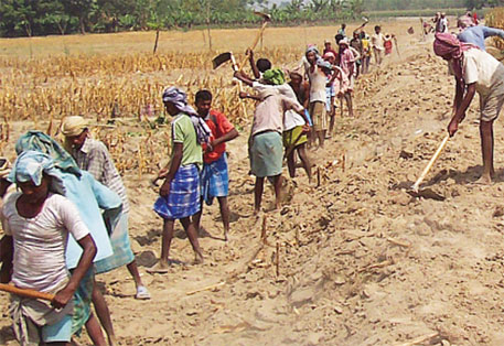 CAG report mentions that only seven per cent of a total of 13.4 million registered families holding MGNREGA job cards were provided jobs for 100 days in 2007-2013