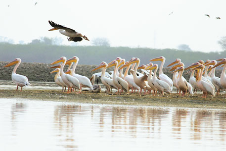 Soor Sarovar is home to more than 160 bird species, including endangered ones