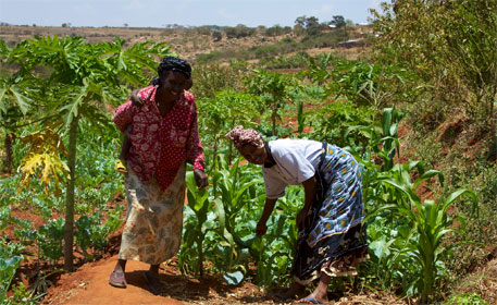 Agriculture in Kenya (Photo: Wikipedia)