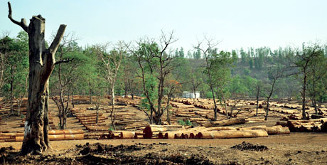 NGT directs Madhya Pradesh to frame guidelines for public consultations for forestland transfer to FDC