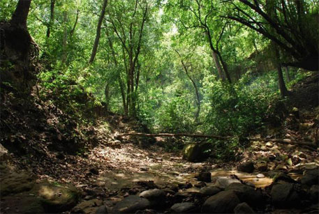 Stream-bed in dense forest