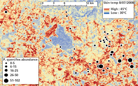 "A thermal map of the scale insect population in Raleigh, US. It is known as the ""City of Oaks"" for its many oak trees"
