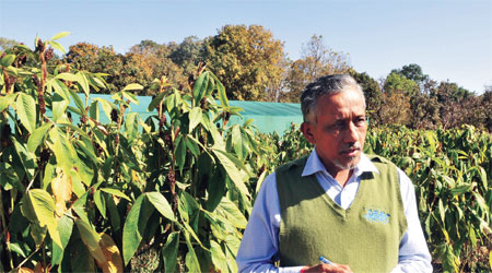 K K Sharma of IINRG says their motive is to reduce tree-based lac farming