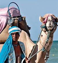 Blame it on camel