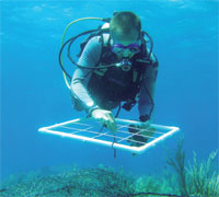 Agricultural pollutants increase the incidence of diseases and bleaching in coral reefs