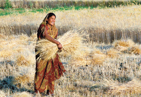 In rural India 75 per cent of the women in the workforce are engaged in agriculture