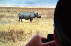 Rhino under hammer