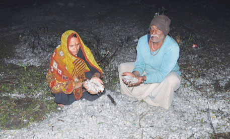 A farmer couple shows hailstones that collected in their farm in Sagar, Madhya Pradesh