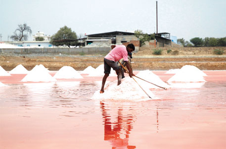 Rampant illegal salt mining has dried up Sambhar lake