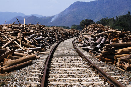Debarked logs wait to be transported to the Rayagada unit of JK Paper. The company sources 85 per cent of its wood through farm forestry