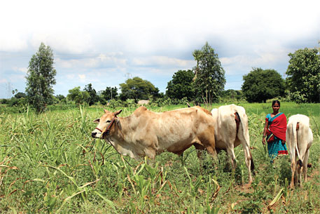 'Union Budget should address Telangana farmers' woes