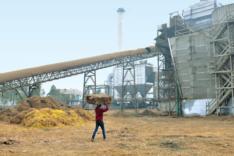 A 12 MW rice straw power plant requires 120,000 tonnes of stubbles a year