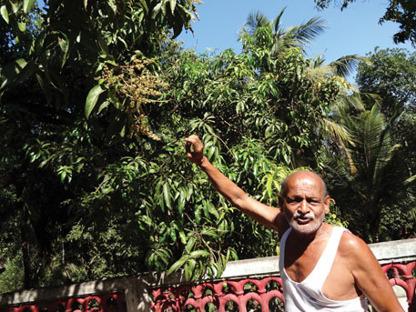 Farmer Appa Pathre shows damaged flowers on his mango tree (PhotoS: Aparna Pallavi)