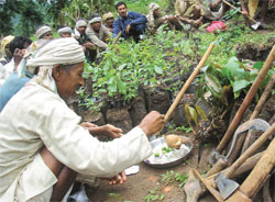 People worship plants and tools by performing traditional rituals