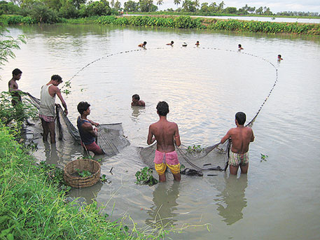 East Kolkata Wetlands nurture the largest wastewater-fed aquaculture system