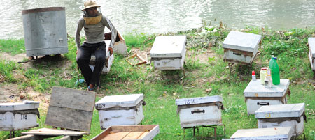 Bee farms to shops
