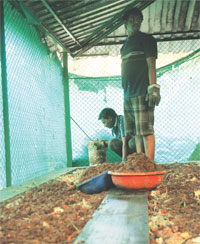Wet waste from households is used for vermicomposting