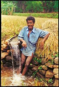 Unshakable: Nimalapedu (Vishakapatnam, Andhra Pradesh)