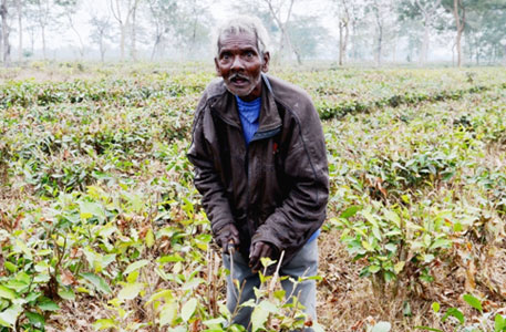 West Bengal labour department's tea garden survey kept under wraps