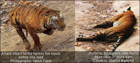 Death of a Tigress