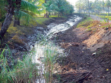 Of the 0.48 million hectares under paddy in East and West Godavari, 0.3 million hectares were destroyed by Nilam, drains