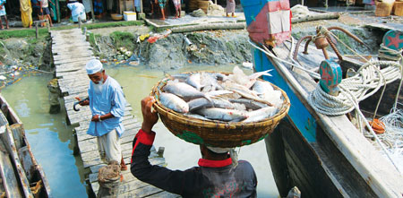 Homeless hilsa