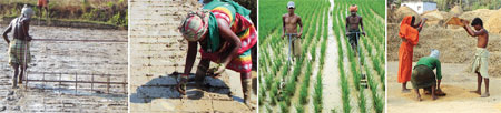 Rice intensification for increasing productivity