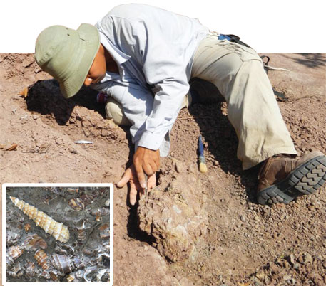 A researcher examines skull of an anthracothere, a hippopotamus-like mammal that lived 40 million years ago, and (left) 35-million-year-old snail fossils in Myanmar