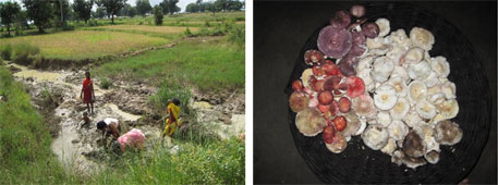 Fishing in the rice fields (left) and a mushroom collection (right)