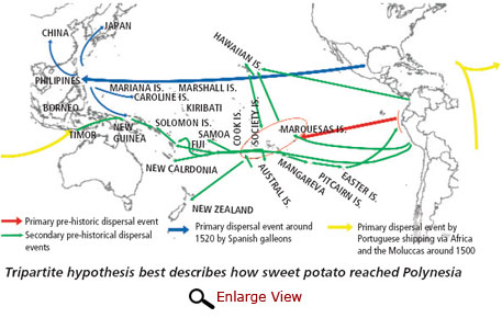 Tripartite hypothesis best describes how sweet potato reached Polynesia