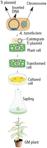 Gene leakage