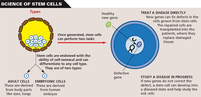 Stem Cell Dilemma