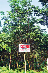 Several rubber plantations are now up for sale in Kerala because they are no more profitable
