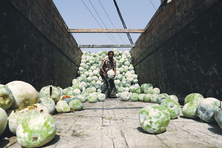 A worker unloads ash gourds that are dried to make pethas