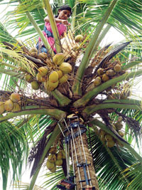 Under the initiative, trained persons get free machines to climb coconut trees
