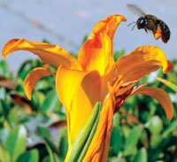 To bring back bees, European commission to impose temporary ban on neonicotinoid pesticide use in farms